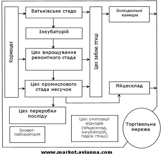 Структура підприємства для промислового виробництва харчових яєць