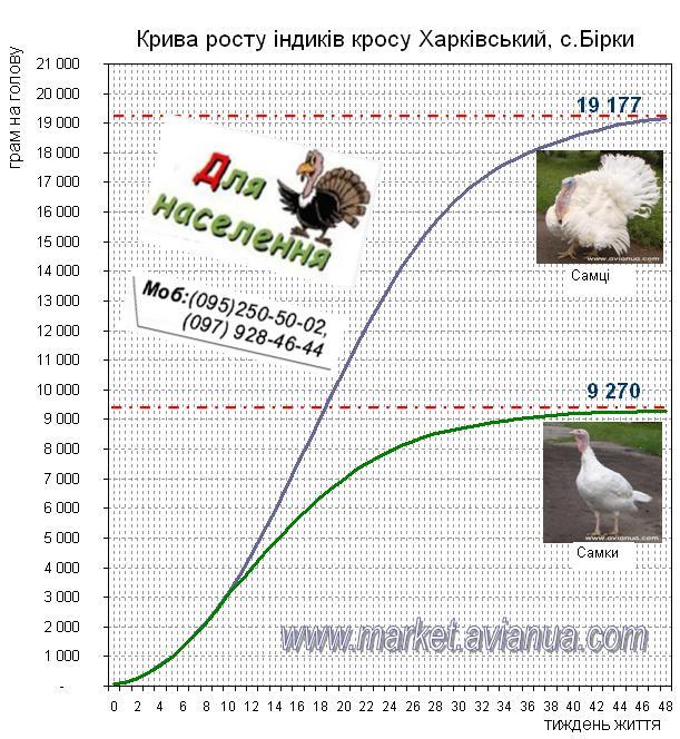 Крива росту індиків кросу Харківський