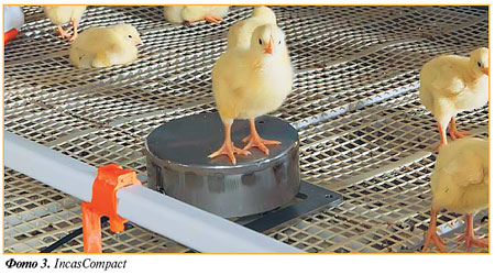 Ваги ncasCompact для зважування птиці
