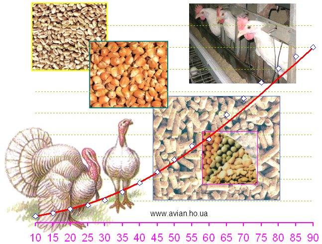 Раціони кормів для птиці